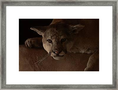 Mountain Lion A Large Graceful Cat Framed Print by Christine Till