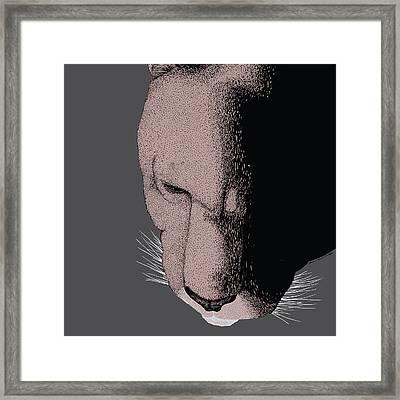 Mountain Lion Framed Print by Karl Addison