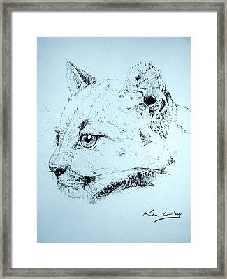 Mountain Lion Framed Print by Ken Day