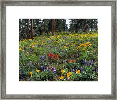 Mountain Wildflowers Framed Print by Leland D Howard
