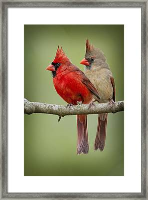Mr. And Mrs. Northern Cardinal Framed Print by Bonnie Barry