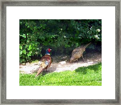 Mr And Mrs Pheasant Framed Print by Will Borden