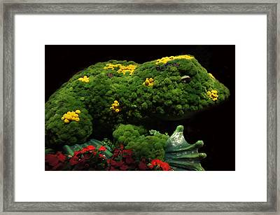 Mr Frog Framed Print by Art Spectrum