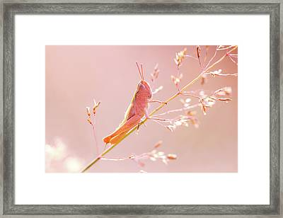 Mr Pink - Pink Grassshopper Framed Print by Roeselien Raimond