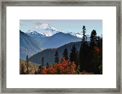 Mt Baker From The Yellow Aster Trail Framed Print by Alvin Kroon