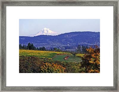 Mt. Hood From A Dundee Hills Vineyard Framed Print by Margaret Hood