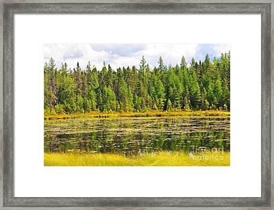 Mud Pond Framed Print by Catherine Reusch  Daley
