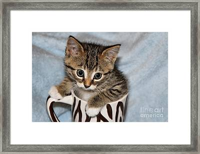 Mug Kitten Framed Print by Teresa Zieba
