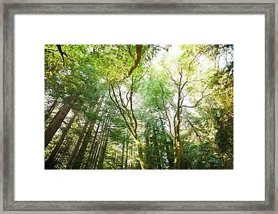 Muir Woods Framed Print by Ariane Moshayedi