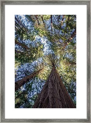 Muir Woods Framed Print by Brad Monahan