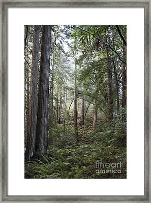 Muir Woods Tranquility Framed Print by Sandra Bronstein