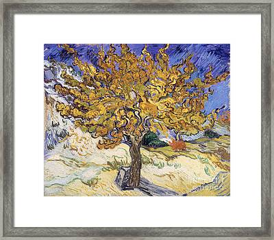 Mulberry Tree Framed Print by Vincent Van Gogh