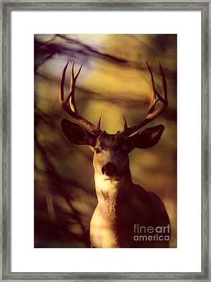 Mule Deer Framed Print by John Hyde - Printscapes