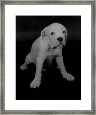 Murphy Framed Print by Terrell Gates