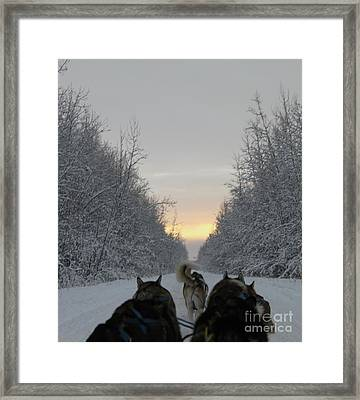 Mushing Into The Sunset Framed Print by Tanja Hymel