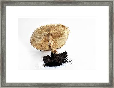 Mushroom - Amanita By Kaye Menner Framed Print by Kaye Menner