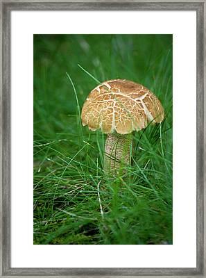 Mushroom In The Grass Framed Print by Teresa Mucha