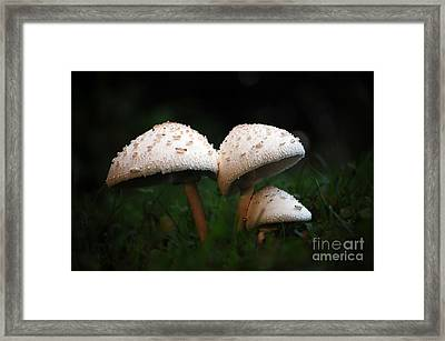 Mushrooms In The Morning Framed Print by Robert Meanor