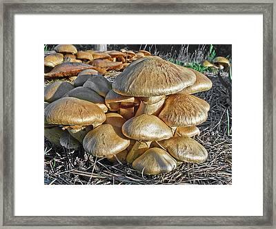 Mushrooms Framed Print by Lynn Andrews