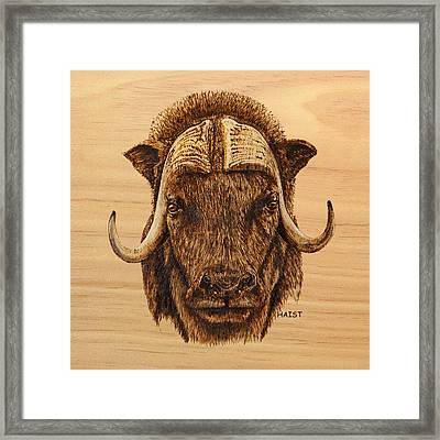 Muskox Pillow/bag Framed Print by Ron Haist