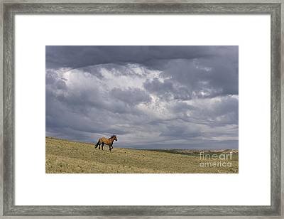 Mustang And Stormy Sky Framed Print by Jean-Louis Klein & Marie-Luce Hubert