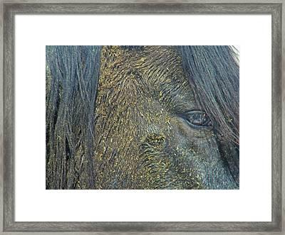 Mustang Framed Print by Lenore Senior