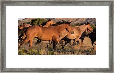 Mustang Run Framed Print by Steve Gadomski