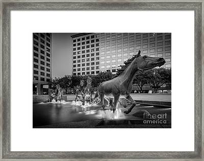 Mustangs At Las Colinas Framed Print by Inge Johnsson