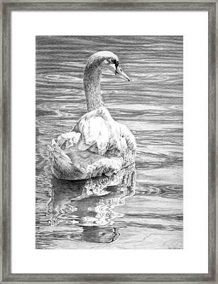Mute Swan Framed Print by Craig Carlson