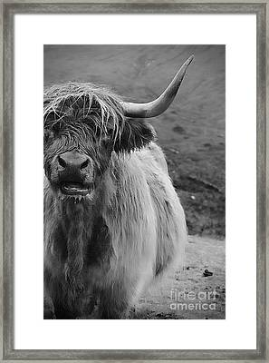 My Best Side Framed Print by Clare Bevan
