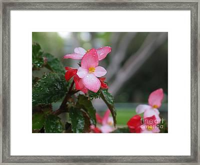 My English Garden 8 Framed Print by Hazel Holland