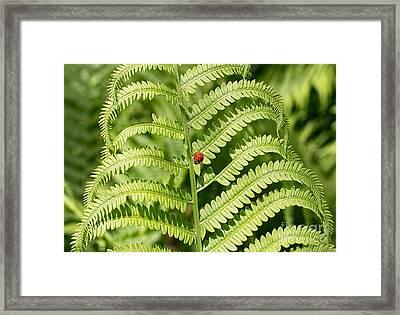 My Lady Bug Awaits Framed Print by Barbara McMahon