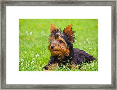 My Little Dog Framed Print by Angela Doelling AD DESIGN Photo and PhotoArt