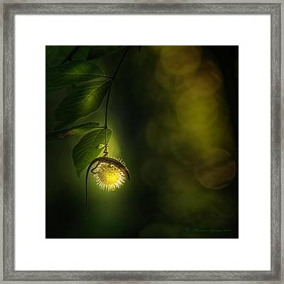 My Little World Framed Print by Marvin Spates