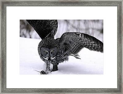 My Mouse Framed Print by Larry Ricker
