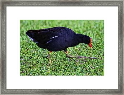 My What Big Feet You Have    Framed Print by HH Photography of Florida