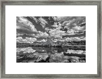 Myakka Dream Framed Print by Jon Glaser