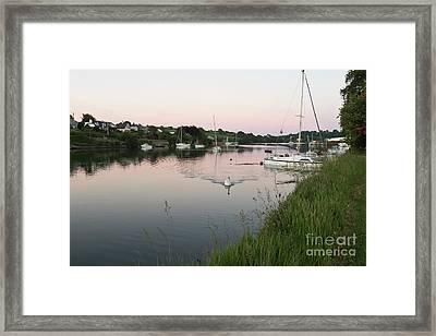 Mylor Bridge Swan At Sunset Framed Print by Terri Waters