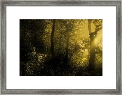 Mysterious Forest Framed Print by Georgiana Romanovna