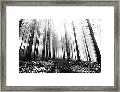 Mysterious Forest Framed Print by Michal Boubin