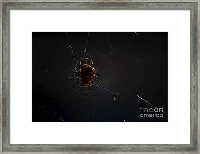 Mysterious Framed Print by James Taylor