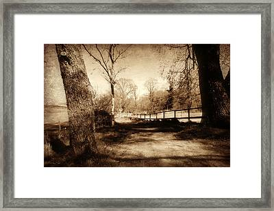 Mysterious Woodland Framed Print by Andrew Read