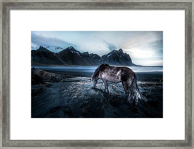 Mystic Icelandic Horse Framed Print by Larry Marshall
