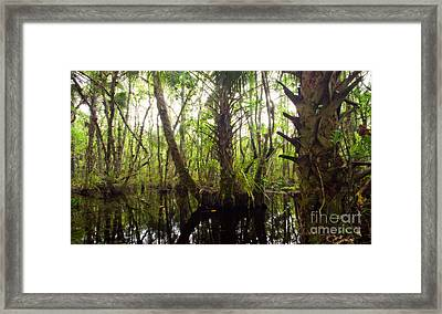Mystic Swamp Framed Print by Matt Tilghman