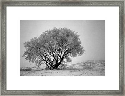 Mystical Morning Framed Print by Julie Lueders
