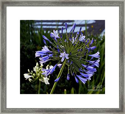 Naked Lady Framed Print by Clayton Bruster
