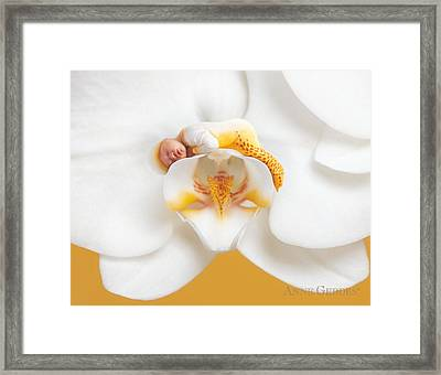Nakeeta In Moth Orchid Framed Print by Anne Geddes