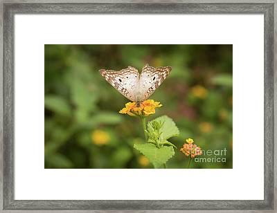 Namaste Butterfly Framed Print by Ana V Ramirez