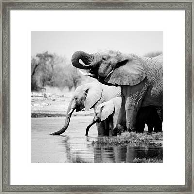 Namibia Elephants Framed Print by Nina Papiorek