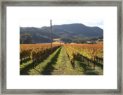 Napa Valley Vineyard . 7d9020 Framed Print by Wingsdomain Art and Photography